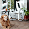 Dog Days Of Summer by Toni Hopper