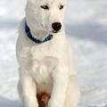 Dog Eared by Kristin Yata