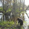 Dog Exploring Mississippi River Bank by Kent Lorentzen