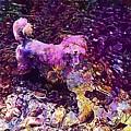 Dog Happy Nature River  by PixBreak Art