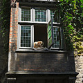 Dog In A Window Above The Canal In Bruges Belgium by Louise Heusinkveld