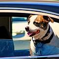 Dog In Car by Karl Rose