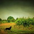 Dog In Chesire England Landscape by Matthias Hauser