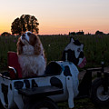 Dog In Cow Wagon  by Mandy Judson