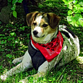 Dog In Red Scarf by Susan Savad