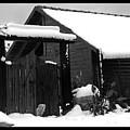 Dog In Snow by Arik Baltinester