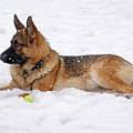 Dog In Snow by Sandy Keeton