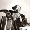 Dog In Tackle Box, C.1950s by H Armstrong Roberts and ClassicStock