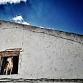 Dog In The Window by Rafa Rivas