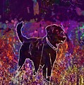 Dog Labrador Animal Canidae Canine  by PixBreak Art