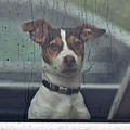 Dog Looking Out Car Window by Jeramey Lende