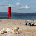 Dog Lying On The Beach In Front Of Red Lighthouse Of Cres by Stefan Rotter