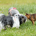 Dog Meeting  by Jaroslav Frank