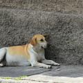 Dog Next To A Wall by Robert Hamm