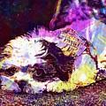 Dog Noddy Lhasa Apso Pet Puppy  by PixBreak Art