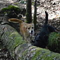 Dog On A Log by David Dand