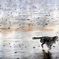 Dog On Beach by Chriss Pagani