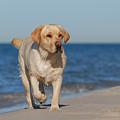 Dog On The Beach by Waldek Dabrowski