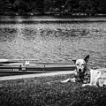 Dog On The Lake #2 by Jay Wollin