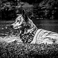 Dog On The Lake by Jay Wollin