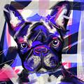Dog Rodney by Go Van Kampen