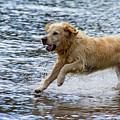 Dog Running On Shallow Lake Shore by Iordanis Pallikaras