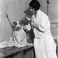 Dog Salon by Fox Photos
