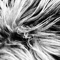 Dog by Sergio Bondioni