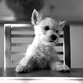 Dog Sitting On The Table by Sumit Mehndiratta