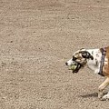 Dog by Sven Paletta