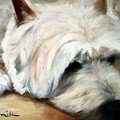 Dog Tired by Mary Sparrow