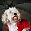 Dog Under Umbrella by Elena Elisseeva