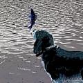 Dog Vs Perch 3 by Chris Taggart