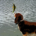 Dog Vs Perch 4 by Chris Taggart