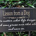 Dog Wisdom by Juergen Roth