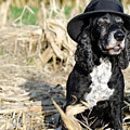 Dog With A Hat by Mats Silvan