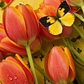 Dogface Butterfly And Tulips by Garry Gay