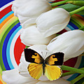 Dogface Butterfly On White Tulips by Garry Gay