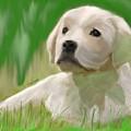 Doggie Seems Sad by Jack Bunds