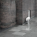 Doggie Strolling 1 by Jez C Self