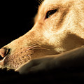 Doggy Dreams by Michelle Himes