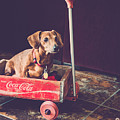 Doggy In A Wagon by Teresa Blanton