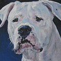 Dogo Argentino by Lee Ann Shepard