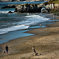Dogs Beach Santa Cruz California Nature  by Chuck Kuhn