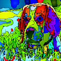 Dogs Can See In Color by Rafael Salazar