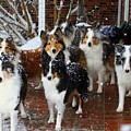 Dogs During Snowmageddon by Kathryn Meyer