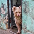 Dogs Of Cuba - 2 by Rand