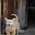 Dogs Of Cuba - 3 by Rand