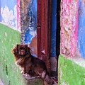 Dogs Of Cuba by Rand
