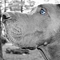 Dogus by Jenny Revitz Soper